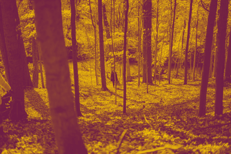 A yellow-red duotone image of Cootes Paradise